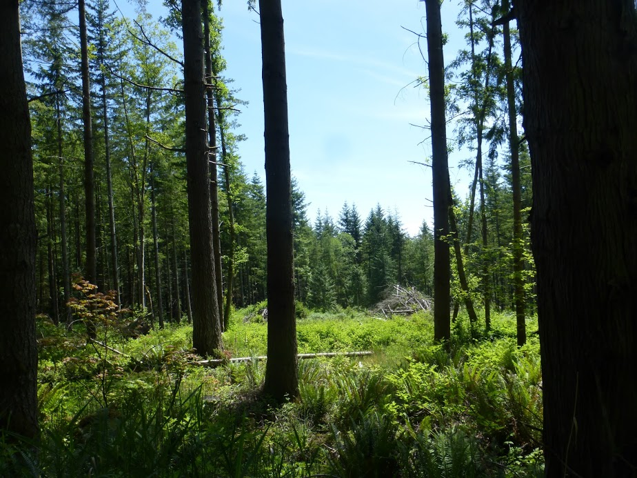 The meadow-like area and the habitat pile on the Janicki property