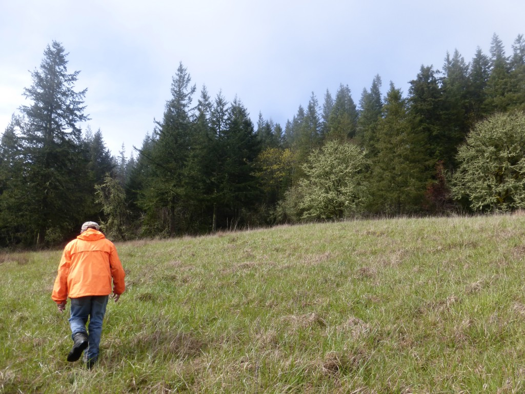 Jim Merzenich hikes up through the meadow restoration area.