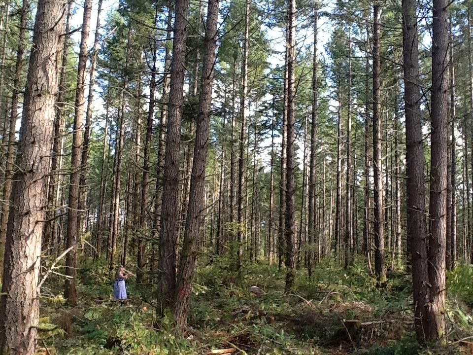 Lemkuhl Family Forest