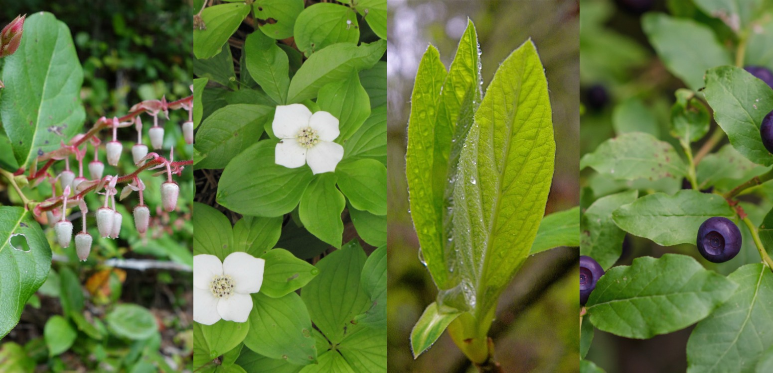 2020 Winter Spring Native Plant Sales Northwest Natural Resource