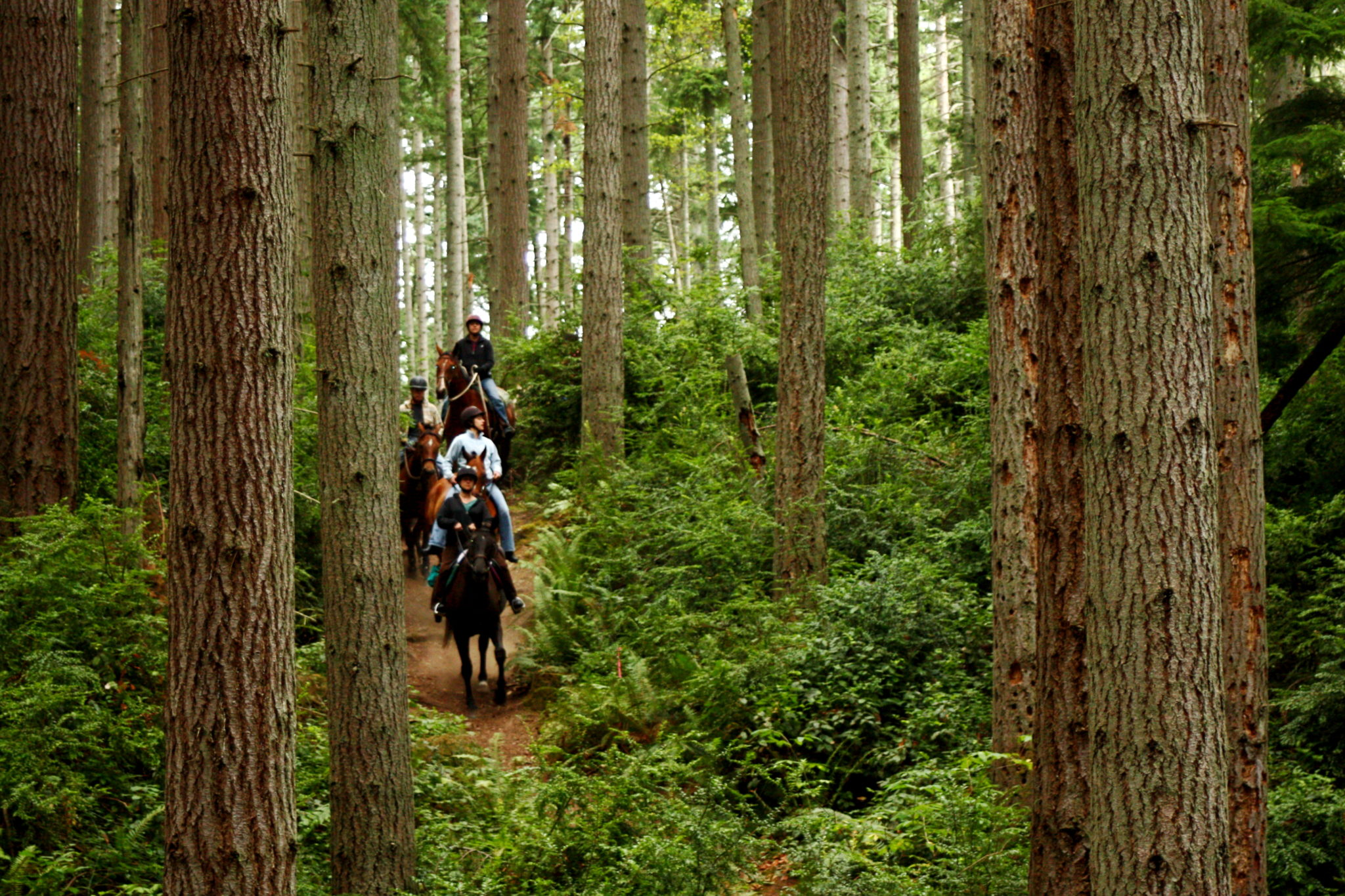 Go Play In One Of King County's Forests