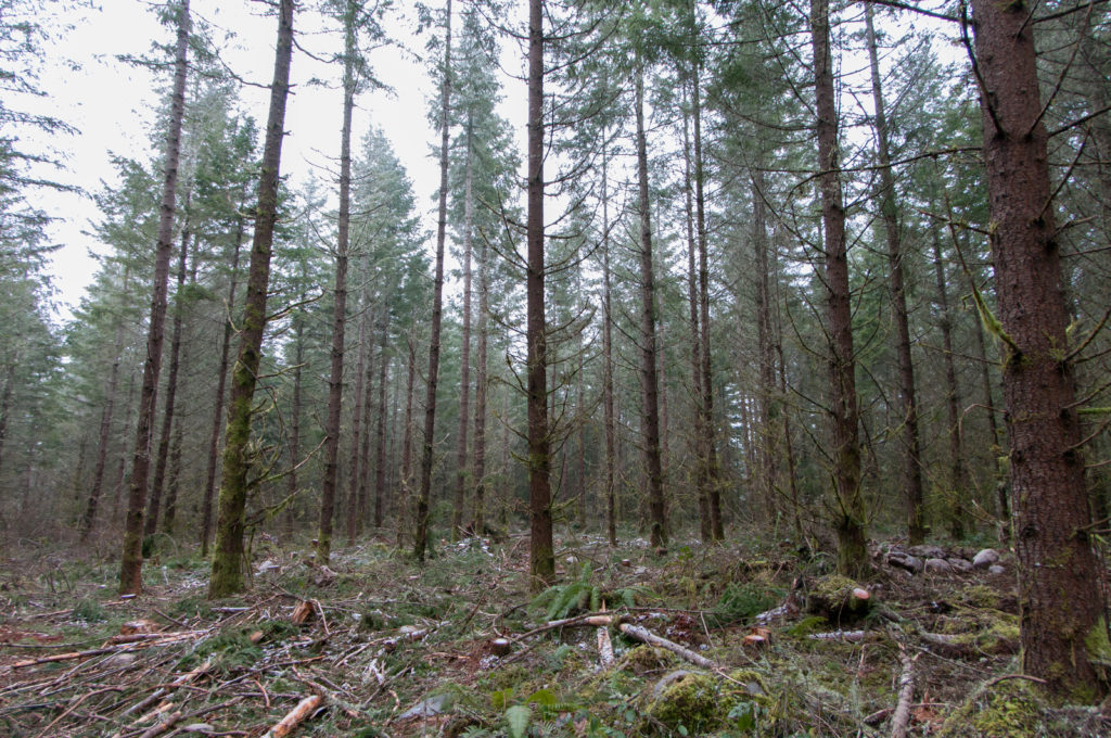 The Rhyme & Reason Behind Pre-Commercial Thinning (aka PCT