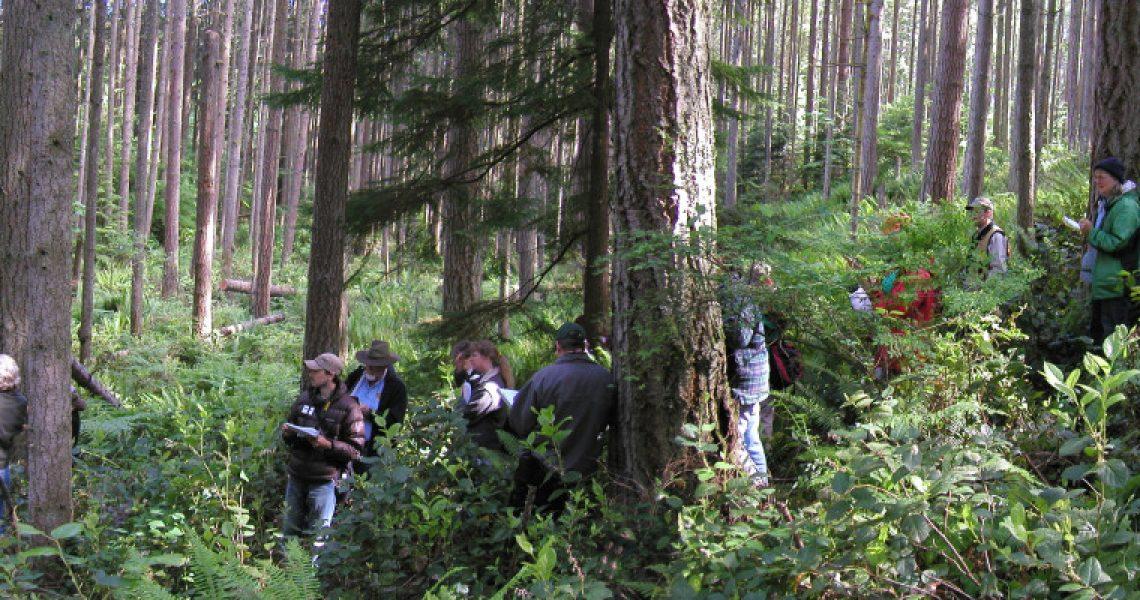Ecological Forestry at Northwest Trek