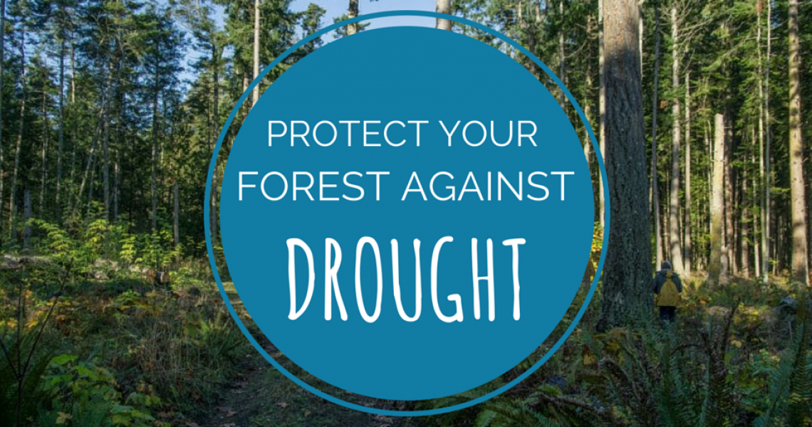 PROTECT YOUR FOREST