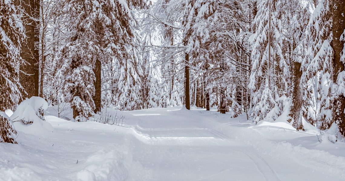 forest-3806328_1920