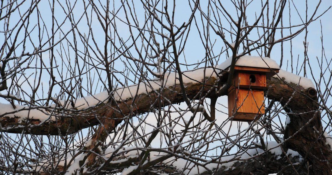 nesting-box-1159560_1920